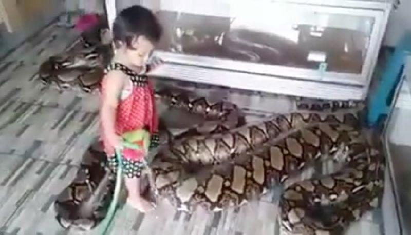 สุดเสียว! คลิปเด็กวัย 2 ขวบเดินอยู่ในกรงงูเหลือมยักษ์ (อันตรายมากห้ามทำตาม)