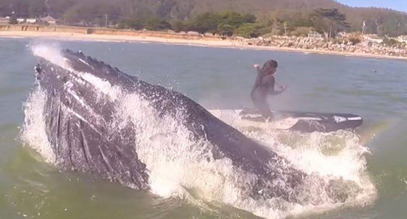 คลิปสาวเป่าฟลุตเรียก 'วาฬ' ได้ผล พุ่งจากท้องทะเลเกือบชนตัว!