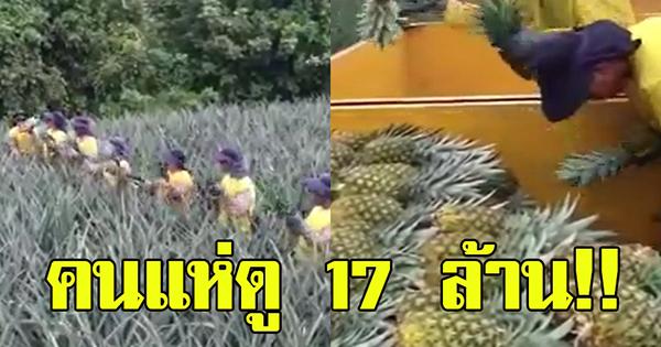 คนแห่ดู 17 ล้าน!! คนงานเก็บสับปะรด เห็นวิธีการเก็นแทบไม่อยากเชื่อ กระฉับกระเฉงว่องไว เครื่องจักรยังสู้ไม่ได้!!
